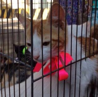 Feira de adoção - gato com laço